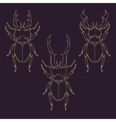 Set of horned beetles in line style Design vector image