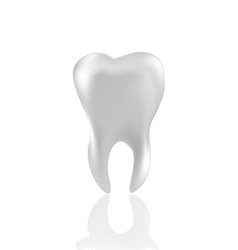 tooth isolated on white vector image