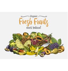 Vintage hand drawn fresh fruits background vector