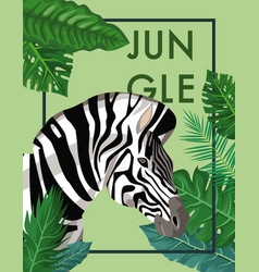 zebra in the jungle vector image