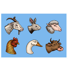 farm animals head a domestic pig goat cow vector image
