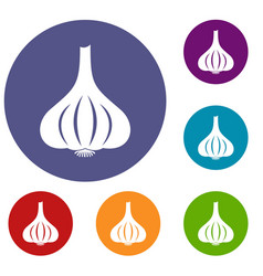 garlic icons set vector image