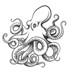 octopus drawn in engraving style vector image