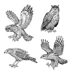 set realistic birds owl and eagle hand drawn vector image