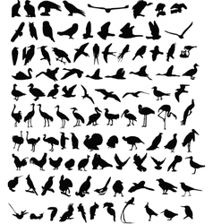 100 birds vector image vector image