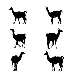 Collection of guanaco silhouettes vector image vector image