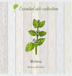 melissa essential oil label aromatic plant vector image