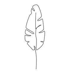 one line drawing contour drawing banana leaf vector image