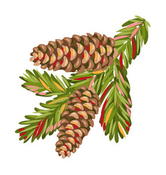 spruce branch with fir cones vector image