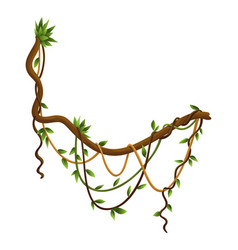 twisted wild lianas branches banner jungle vine vector image