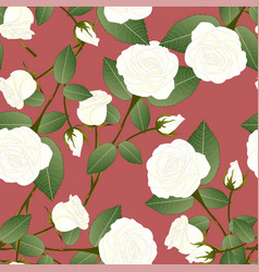 white rose - rosa on red brown background vector image