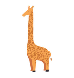 wild giraffe isolated icon vector image