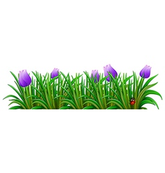 A flowering plant with violet flowers vector