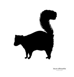 black silhouette skunk isolated image vector image