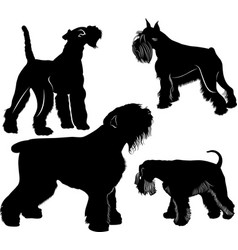schnauzers and fox terrier dogs collection vector image
