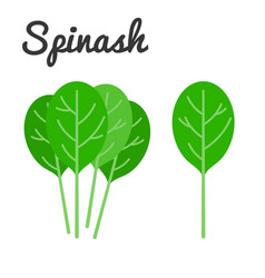 spinach vector image