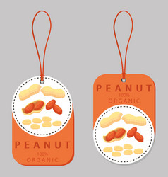 the theme nuts vector image