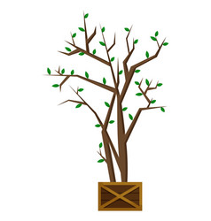Tree plant in pot with fresh sprouts houseplant vector