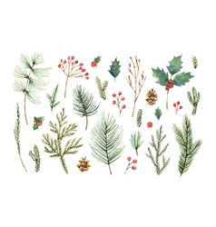 watercolor christmas set with evergreen vector image vector image