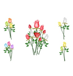 Roses Bouquet Collection vector image
