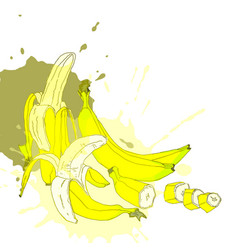 whole and pieces of bananas vector image