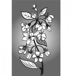blossom branch vector image vector image