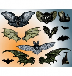 Bats wings vector
