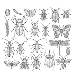 Insects sketch butterfly beetle and fly ant vector