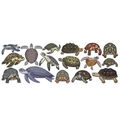 Sea turtle cartoon set icon vector