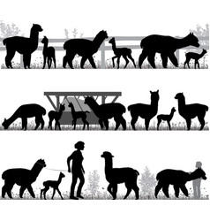 silhouettes of alpacas and its cubs outdoors vector image