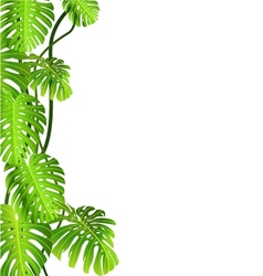 Tropical plant vector image vector image