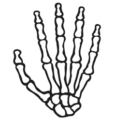 Human skeleton hand vector