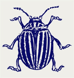 Beetle leptinotarsa decemlineata vector image vector image