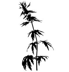 motherwort vector image
