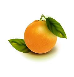 realistic orange fruit isolate orange with vector image