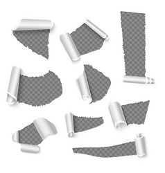 Torn papers with curls holes in paper vector