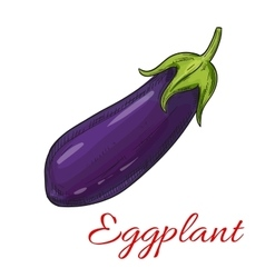Sketched eggplant or aubergine vegetable vector image vector image