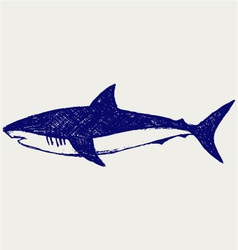 Reef Shark vector image
