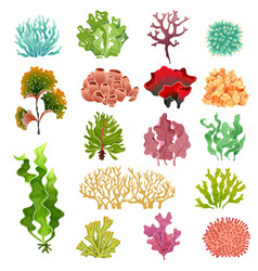 coral and seaweed underwater flora sea water vector image