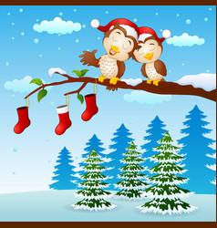 christmas couple owls on the tree branch with sock vector image
