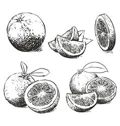 Orange Isolated sketch vector