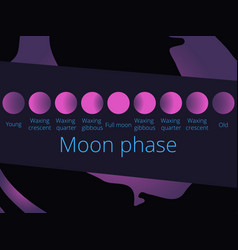 phases of the moon from the crescent to full moon vector image