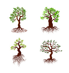 Trees with green leaves and roots tree vector