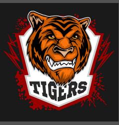 tigers mascot - sport team vector image
