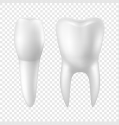 3d realistic render white toothicon set vector