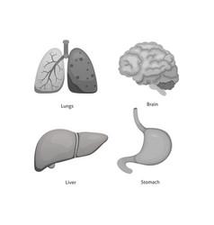 cartoon human organs set anatomy of body vector image