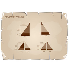 Detail population pyramids graphs depend on old vector