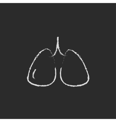 Lungs icon drawn in chalk vector