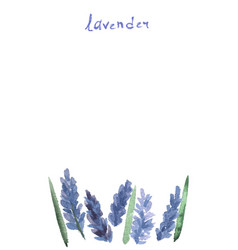 Watercolor lavender vector