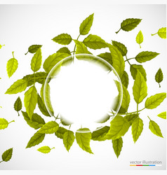 beautiful green circle of leaves vector image vector image